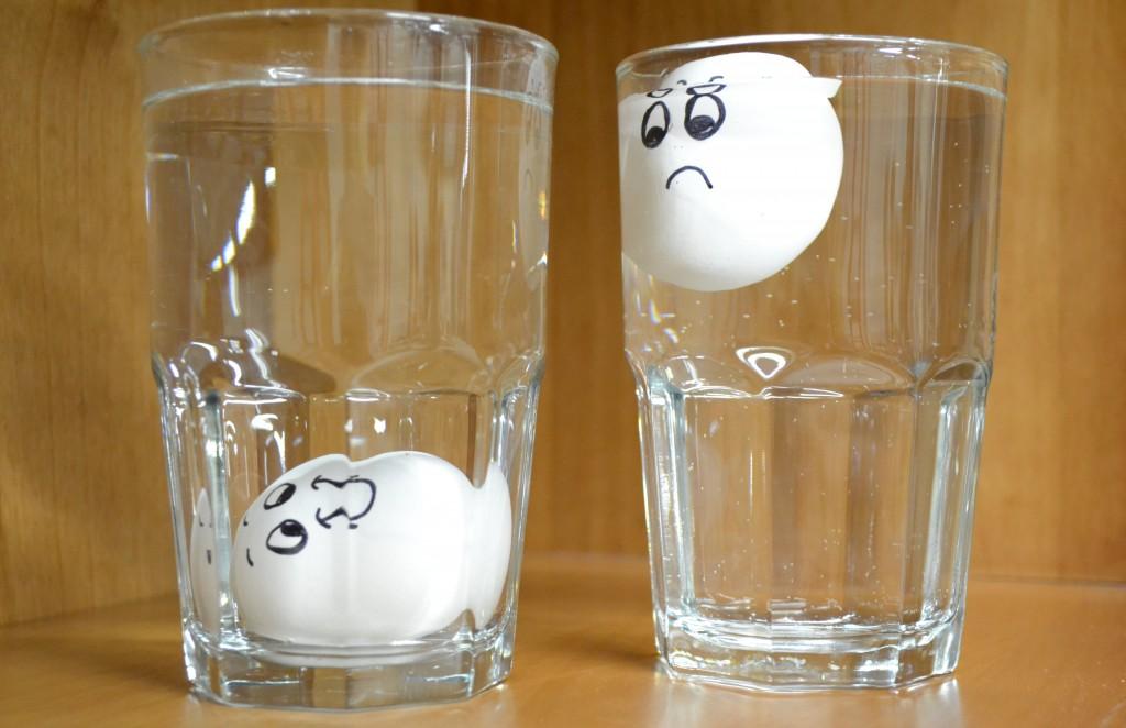 Egg Test Results
