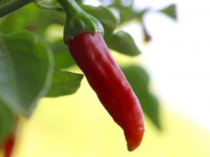 Chili_chillies_peppers