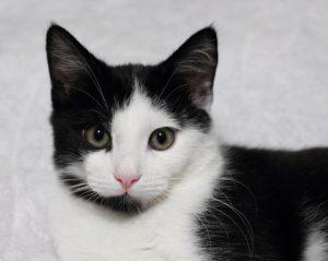 A pretty cat looks into the camera.