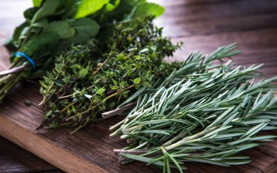 Guide to Fresh Herbs